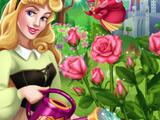 Аврора Выращивает Розы