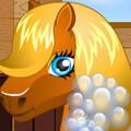 Домашняя пони